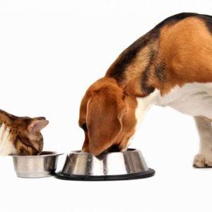 Для небольших собак и кошек